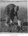 Elderly Minidoka internee collecting coal, 1944