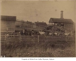 Nelson family farm, Thomas, n.d.