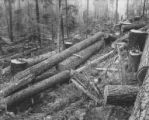 Fallen trees and splintered stumps, Pierce County, ca. 1904