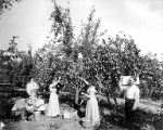 Family picking apples from tree in orchard, Yakima Valley, ca. 1910s