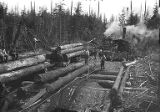 Loggers building corduroy road with steam locomotive and steam donkey in background, Washington,...