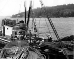 Purse seining, probably Puget Sound, Washington, ca. 1938