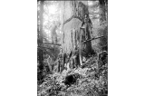 Loggers on springboards undercutting cedar with crosscut saw and felling axes, Deep River,...
