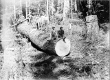 Logging crew, Deep River, Washington, 1903
