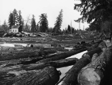 Humptulips River filled with logs after flooding, Washington, 1909