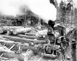Loading logs at Hall and Bishop Logging Co. camp, Gettysburg, Washington, ca. 1900