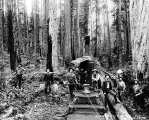 Logging crew yarding logs with donkey engine, Mason County Logging Co., Washington, n.d.