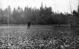 Oyster bed, Oyster Bay, Washington, n.d.