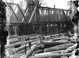 Logs jammed up against the Humptulips River railroad bridge, Washington, 1909