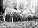 Loggers with crosscut saws and other hand equipment in front of fir log, vicinity of Bothell,...