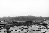 Harvesting oysters by barge at low tide in Willapa Bay, Washington, ca. 1940