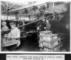 Interior view of workers in canning area where cans were conveyed from puree room to packing...
