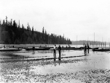 Oyster beds, probably Washington, n.d.