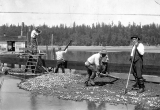 Building dikes, Olympia Oyster Co, Thurston County, Washington, ca. 1920