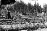 Survey crew in logged off land, Grays Harbor, Washington, n.d.