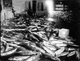 Fish catch on floor of cannery, possibly Aberdeen, Washington, n.d.