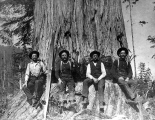 Loggers with felling axes and crosscut saw sitting in undercut of large cedar, Sultan, Washington,...