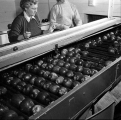 Interior unidentified apple packing plant, Wenatchee, 1954
