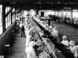 "Interior view of processing room with mainly female workers in ""mob hats"" sitting and..."