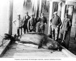 Group of men standing around dead sea lion on dock, vicinity of the lower Columbia River, ca. 1900
