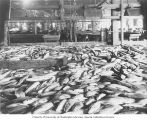 Salmon cannery interior showing salmon on floor ready for dressing, Washington, ca. 1928