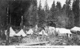 Logging camp tents pitched among tree stumps, vicinity of Clatsop, Oregon, ca. 1918