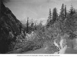 Mountains with snow-covered trees in foreground, vicinity of the Penn Mining Company, .d.