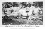Horse and cart loaded with lumber for transport to  the Penn Mining Company at Goat Lake, n.d.