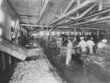 Interior view of workers in processing room standing and working at fish cleaning stations,...