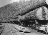 Trainload of logs on siding, Bloedel, Stewart & Welch logging operations, Vancouver Island,...
