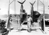 Otto Braun posing with two marlins and a dorado on dock, July 28, 1955
