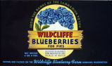 "Blueberry syrup box label from ""Wildcliffe Farm,"" Kenmore, ca. 1945"