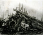 Photo of Meredith  Lumber Co. logging horses