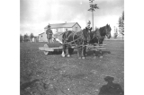 Horse team hauling stone roller for planting seed at Fort Lawton, Washington,  March 19, 1899