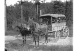 Horse drawn ambulance at Fort Lawton, Washington,  1905