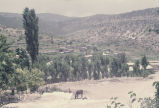 Donkey grazing with village and hills in the background