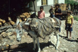 Donkey wearing packsaddle and empty saddlebag