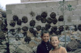 Boys in front of a wall on which dung patties are stuck to dry