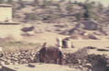 Blurry picture of donkey in front of stone wall