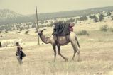 Man leading camel with plain weave textile covering saddle and filled white bags in the background