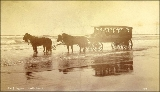Excursion tour in horse drawn wagon at North Beach on the Washington coast, ca. 1892.