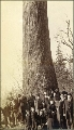 Group of men, women and children in front of large fir tree, probably Washington state, ca. 1891.
