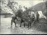 Five prospectors panning for gold in a creek, Alaska, 1897.
