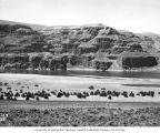 West wall of Columbia Gorge near Vantage, August 10, 1950