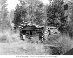 Old miner's cabin near Swauk Creek placer mines northeast of Cle Elum, October 1925