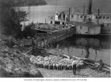 Men corralling sheep onto boat, probably at Lake Chelan, n.d.