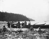 Makah group with canoes and halibut catch on beach at Neah Bay, Washington, ca.1903