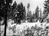 Spokane encampment in winter, possibly Indian Canyon, Spokane Washington