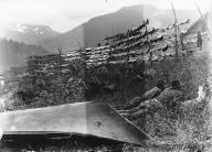 Chilkat  men drying salmon on racks, Chilkoot,  Alaska, 1894