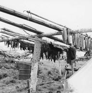 Fish drying rack with fish and nets, Alaska